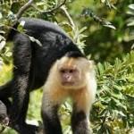 Palo Verde National Park 2