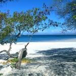 Playa Cabuyal 1