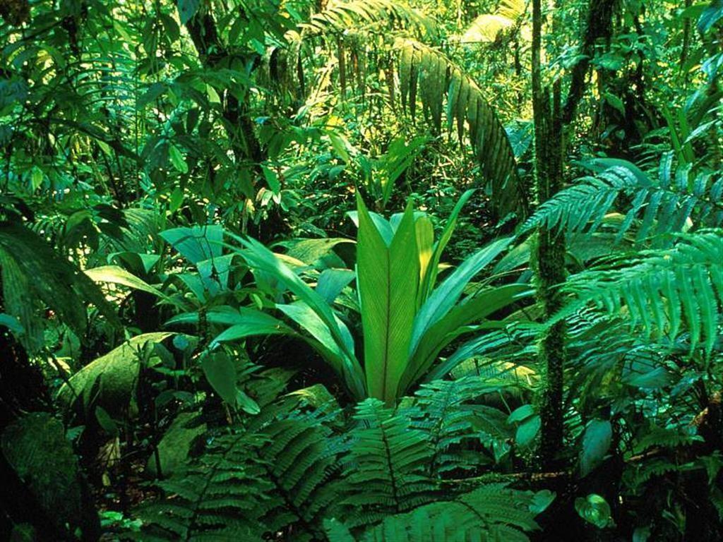 foresta _Braulio_Carrillo_National_Park__Costa_Rica
