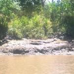 El Viejo (lungo il fiume Tempisque1)