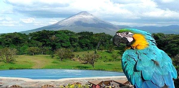 pappagallo-ammira-vulcani-costa-rica