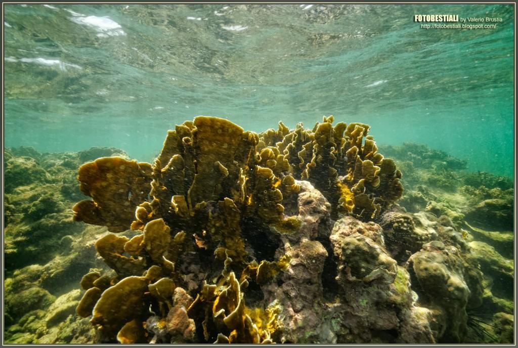 barriera-corallina-parco-cahuita-costa-rica