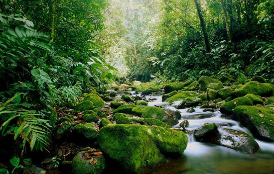 costa_rica_foreste.energia.rinnovativa