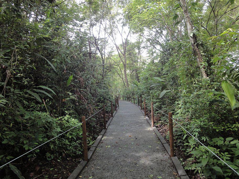 passaggio- riserva-parco-carara-costa-ricajpg