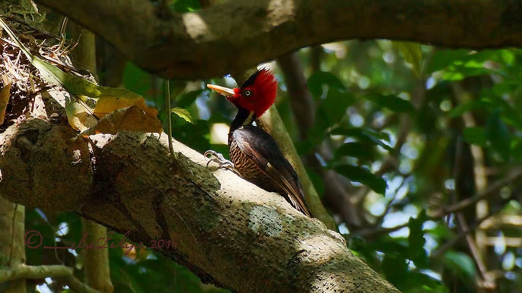 uccello-cabo-blanco-riserva-naturale