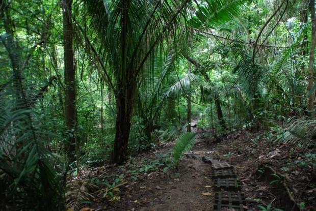 alberi-iserva-naturale-cabo-blanco-costa-rica