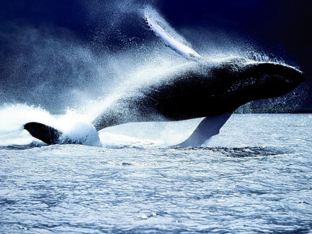 balena- salto-costa-rica-