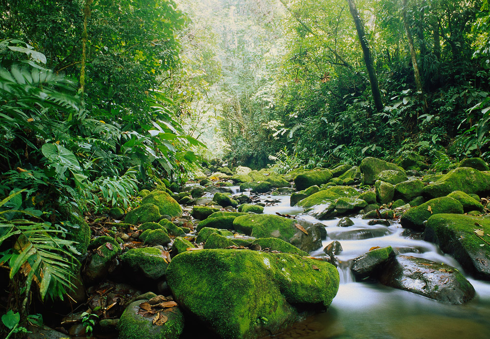monteverde.Costa -ricapg