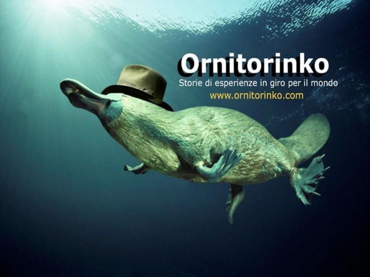 ornitorinko1-739x554