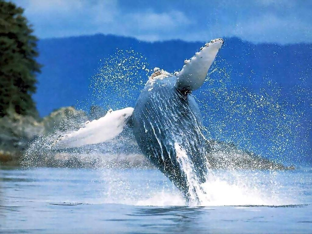 salto-balena-costa-rica