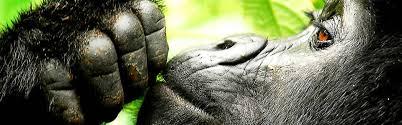 scimmi-che riflette-se-si-vive-con-500-euro-al-mese