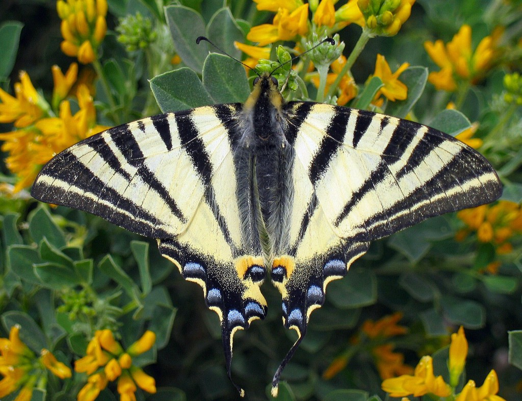 farfalla -costa-rica