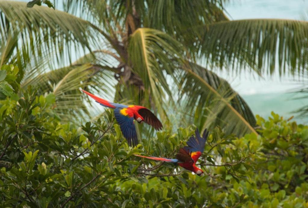 pappagalli-foresta-costa-rica-polmone-verde-pg