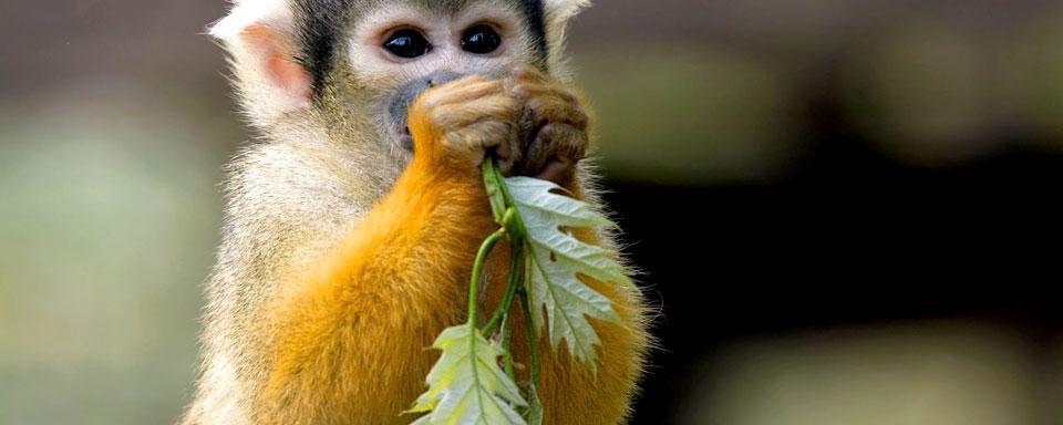 scimmie-scoiattolo-costa-rica