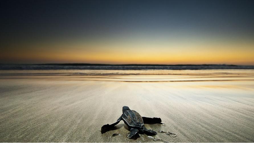 tartaruga-spiaggia-bandiera-blu-costa-rica-jpg