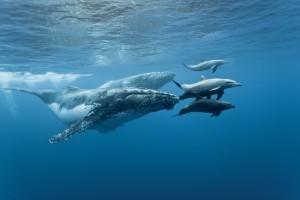 Balene Riserva Biologica Isla del Caño