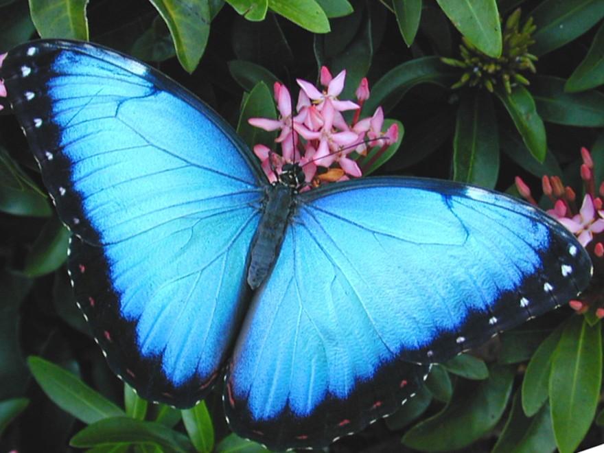 farfalle -costa-ricajpg