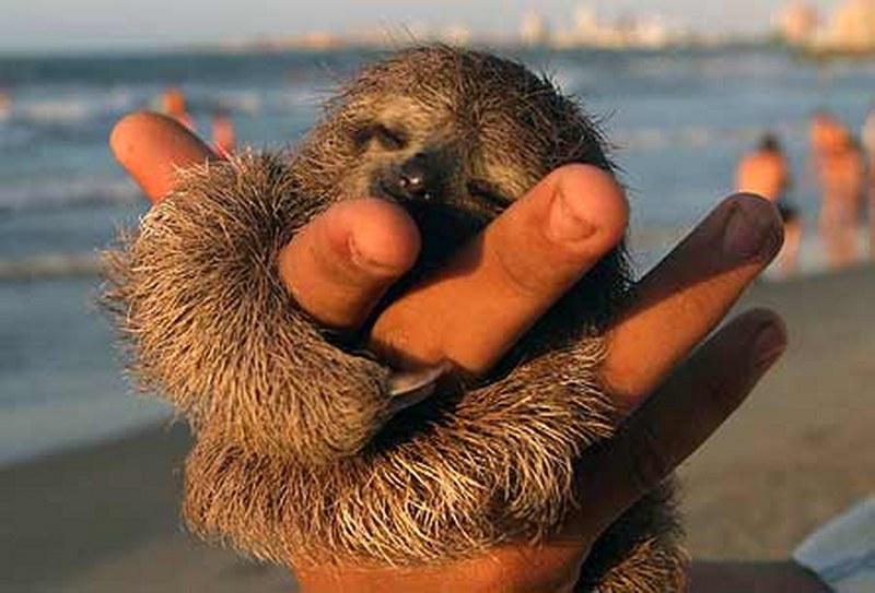vorremmo-tutti-essere-un-bradipo-in-costa-ricajpg