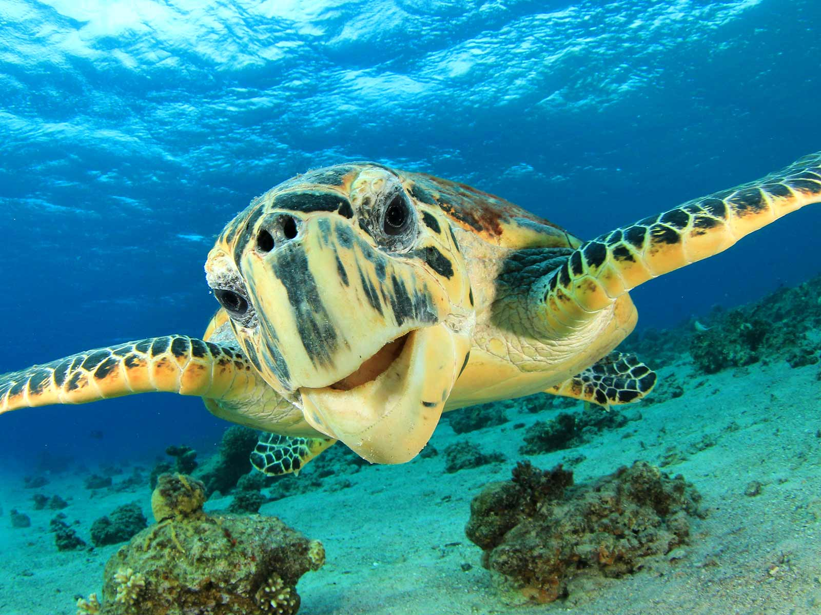 animali in libertà in costa rica